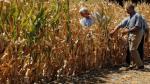 Con la sequía de alimentos solo ganarán Brasil, Argentina y Paraguay - Noticias de rafael mejia