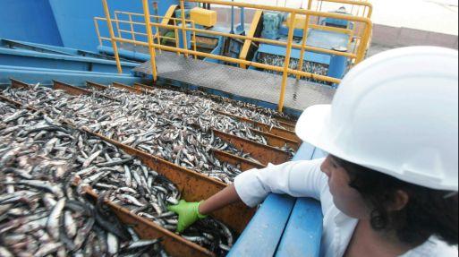 <strong>Factor.</strong> La presencia de aguas calientes ha reducido la presencia de anchoveta en el norte y sur. (USI)
