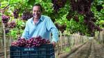 Complejo Agroindustrial Beta planea facturar US$ 200 millones al año en el 2018 - Noticias de victor matta curotto