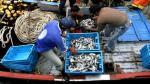 """""""Ampliación del Muelle Norte del Callao terminará con la pesca artesanal de la zona"""" - Noticias de jose luis bernuy"""