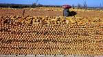 Demanda de trigo de China elevaría los precios globales del grano en 10% - Noticias de tom puddy