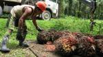 Industrias del Espino denunciaría por competencia desleal a biodiesel de Argentina - Noticias de ronald campbell