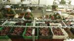 CADE Ejecutivos 2013: Apostando por una agricultura peruana moderna - Noticias de agricola don ricardo