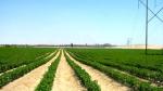Orbes invierte US$10 millones en el Primer Centro Empresarial Agrícola - Noticias de ciprés