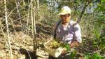 Agrobanco continuará atendiendo solicitudes para refinanciar deudas de cafeteros - Noticias de juan rheineck