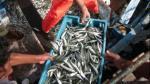 Construyen desembarcadero artesanal del Puerto Morín en La Libertad por S/. 12 millones - Noticias de sergio salaverry
