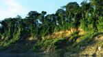 Parque Nacional del Manu impone nuevo récord de biodiversidad - Noticias de reservas naturales del manú