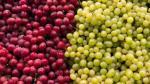 Producción de uva se incrementó en 10.7% en marzo, según el INEI - Noticias de ubicación geográfica