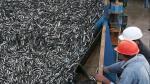 Produce decomisa más de 45 toneladas de anchoveta a embarcación industrial - Noticias de lobos marinos