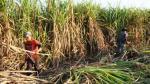 Acciones de empresas azucareras trepan 15% por OPA - Noticias de cartavio