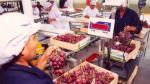 Precio de exportación de la uva peruana cayó ligeramente en la campaña pasada - Noticias de erika manchego