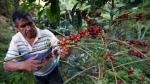 Calentamiento global favorece hongo que amenaza café orgánico - Noticias de nils leporowski