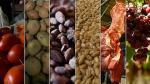 Productores del norte buscan ser proveedores de 200 grandes empresas - Noticias de melia lima