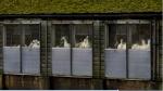 Nuevo brote de gripe aviar en Europa - Noticias de asia