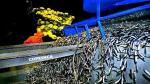 China Fishery fija plazo en marzo para amortizar deuda de Copeinca - Noticias de anchoveta