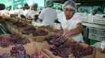 Exportaciones de uva a China sumarían 8 millones de cajas esta temporada - Noticias de exportación de productos no tradicionales