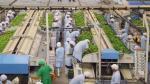 Empresas podrán registrar datos de sus trabajadores en planilla hasta el 31 de enero - Noticias de empresas peruanas
