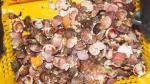 Exportación de conchas de abanico cayó 17.4% entre enero y noviembre del 2014 - Noticias de industria extractiva
