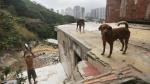 El progreso social de América Latina se ha detenido, ¿qué se debe hacer? - Noticias de desastres naturales