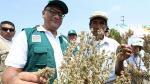 Pagos del Seguro Agrario a pequeños productores del Cusco comenzarán en abril - Noticias de mapfre perú