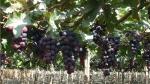 Agroindustrial Beta invierte más de US$ 80 millones - Noticias de asia