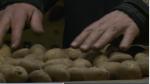 Holanda riega con agua salada sembríos de papa - Noticias de campo mar u