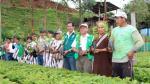 Minagri inicia instalación de cultivos lícitos por hoja de coca en el VRAEM - Noticias de kimbiri