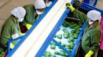 Mincetur: especialistas agrícolas inician funciones en Ocex - Noticias de plan nacional de acción del café peruano