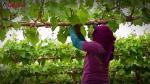 Las agroexportaciones y su llegada a 157 destinos - Noticias de miguel ognio