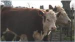 Argentina volverá a exportar carne a EE.UU. después de 14 años - Noticias de hector timerman