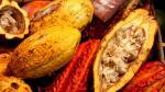 Perú aspira a ingresar en el mercado selectivo del cacao - Noticias de jose iturrios