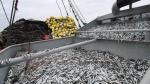Pesca de anchoveta en zona sur supera a la fecha el 70% de la cuota asignada - Noticias de juan cala