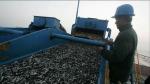 Enfen confirma que El Niño empieza a afectar a anchoveta - Noticias de luis icochea