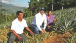 Minagri: Provraem ayudará a completar la reconversión productiva de 3,000 hectáreas este año - Noticias de fondo agroperu
