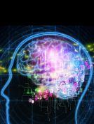 BRAIN. Conoce la iniciativa que aspira a desentrañar los secretos del cerebro