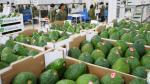 Perú iniciará este mes exportaciones de palta Hass a China - Noticias de tailandia 2013