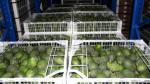Supermercados botan a la basura alimentos por S/. 300 millones cada año en el Perú - Noticias de falta de higiene