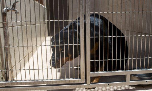Las mascotas de los venezolanos son las nuevas víctimas de la crisis económica - Noticias de policía canina