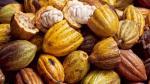 Perú envió primer lote de cacao fino de aroma a Francia - Noticias de cocaleros