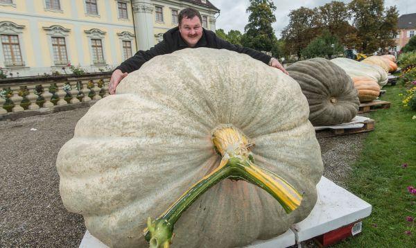La calabaza más grande de Alemania pesa 812.5 kilogramos