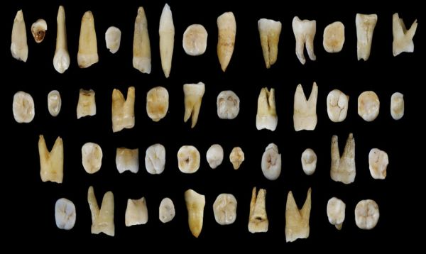 Dientes hallados en caverna china reescriben historia de primera migración humana - Noticias de asia oriental