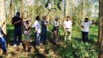 Agrobanco lanzará crédito forestal para financiar plantaciones y agroforestería - Noticias de walther reategui