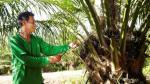 Cacao con valor agregado, el nuevo objetivo del Grupo Palmas - Noticias de europa