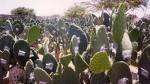 ADEX y Promperú: colorantes naturales peruanos no son dañinos para la salud - Noticias de daniel campos