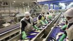 Empresa de harina de pescado TASA espera que captura de anchoveta se normalice en el 2016 - Noticias de actividad empresarial en europa