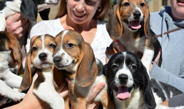 """Logran producir primeros perros """"in vitro"""" en el mundo - Noticias de universidad cornell"""