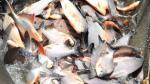 Produce: Puno aprueba plan regional de desarrollo acuícola para los próximos 15 años - Noticias de santos laguna