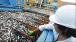 Produce suspende actividades extractivas de anchoveta en tres zonas del litoral - Noticias de cinco millas