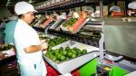 Agrícola Matilda, de Cusco, exportará 300 toneladas de palta hass a Europa - Noticias de alfonso velasquez tuesta