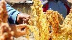 Perú se consolidó como primer exportador de quinua a nivel mundial - Noticias de peru vs. bolivia